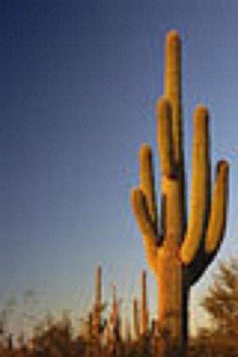 Carnegia gigantea Saguaro cactus di semi di cactus 20 SEMI