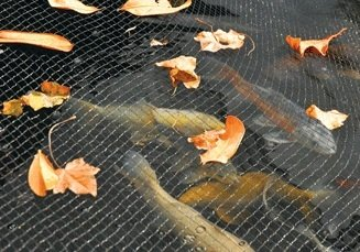 Hozelock Teichabdecknetze Teichnetz Medium, Schwarz, 3 x 4 Meter