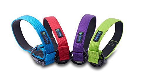 extra small neon dog collar - 7