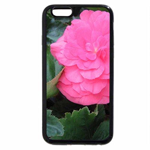 iPhone 6S / iPhone 6 Case (Black) Flowers garden in greenhouse 04