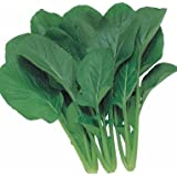 JustSeed Komatsuna - Japanese Green Boy - 400 Seeds