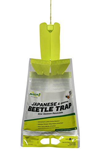 Natural Japanese Beetle Control - RESCUE! Non-Toxic Disposable Japanese and Oriental Beetle Trap