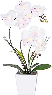 Homeseasons LED Lighted Artificial Orchid Arrangement-Battery Operated Orchid