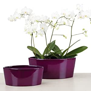 Scheurich 517049 - Maceta para flores