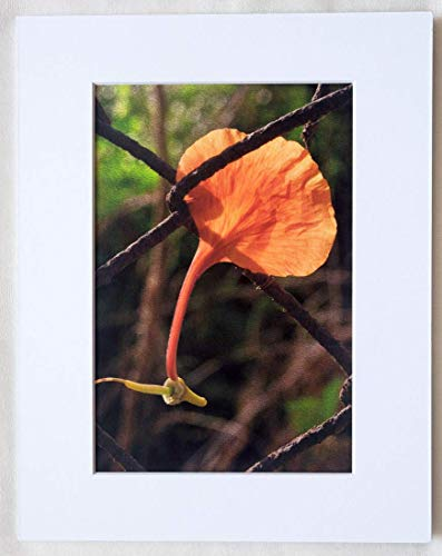 Wall Art 'The Petal' - Bright Orange Petal Wedged in a Rustic Fence - Matted 7