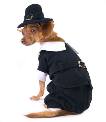 Puppe Love Pilgrim Boy Costume for Dogs - Size 5 (14