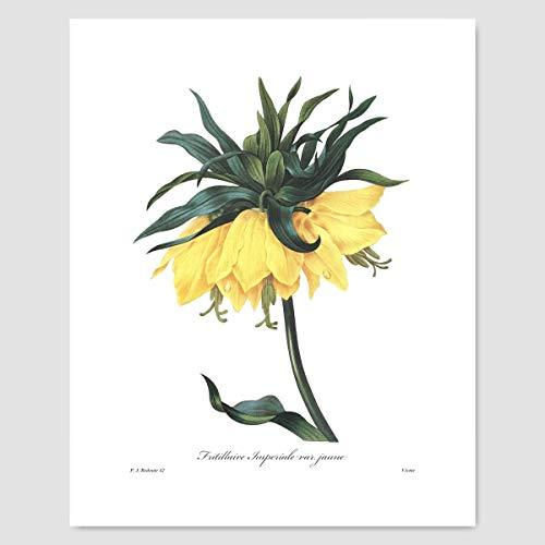 Yellow Flower Wall Art (Botanical Print, Tropical Cottage Artwork) Pierre Redoute - Unframed