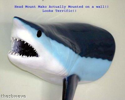 Giant Taxidermy Mako Shark Head Fiberglass Wall Mount by Land and Sea