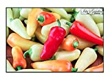 buy Santa Fe Grande Hot Pepper Seeds, 50+ Premium Heirloom Seeds, Chili Peppers, (Isla's Garden Seeds) Non Gmo Organic Seeds, 90% Germination, Highest Quality! now, new 2019-2018 bestseller, review and Photo, best price $5.99