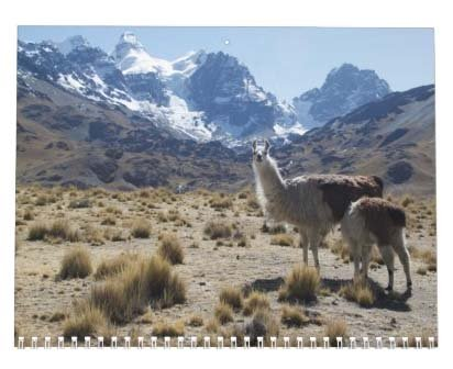 Llama Calendar - Best South America Images in Snow Capped Andes Mountains of Bolivia and Peru Photo #5