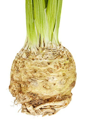 David's Garden Seeds Celeriac Mars SV660 (Green) 100 Organic Seeds