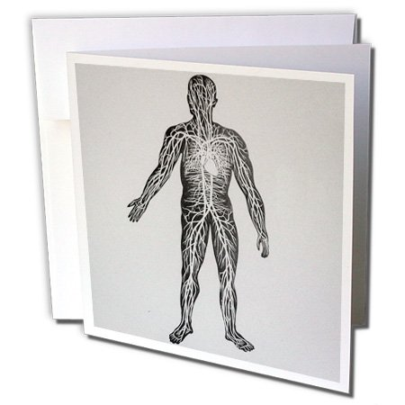 Scenes from the Past Magic Lantern Slides - Vintage Medical Study Glass Slide the Human Circulatory System 1900 - 1 Greeting Card with envelope - Glasses Medical Card With