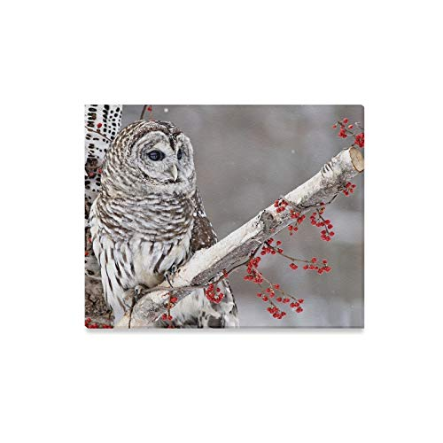 XINGCHENSS Wall Art Painting Barred Owl Perched Birch Tree Surrounded Prints On Canvas The Picture Landscape Pictures Oil for Home Modern Decoration Print Decor for Living Room