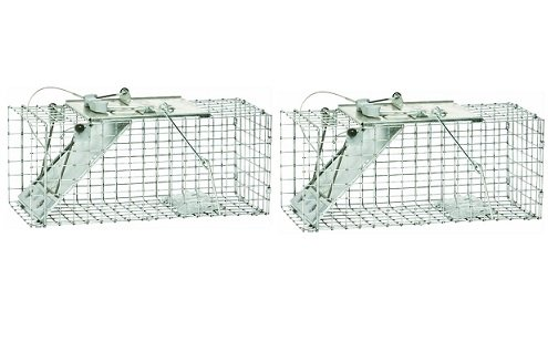 et One-Door Cage Trap for Squirrels and Small Rabbits (2-Pack) (Havahart Easy Set)