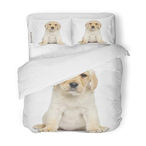 Set Beige Dog Labrador Puppy Sitting and Facing White Alone Animal Canine Decorative Bedding Set with 2 Pillow Shams Full/Queen Size ()