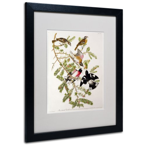 Rose-Breasted Grosbeak Matted Artwork by John James Audubon with Black Frame, 16 by ()