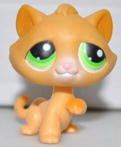 Amazoncom Kitten 110 Raised Paw Orange Green Eyes One Paw