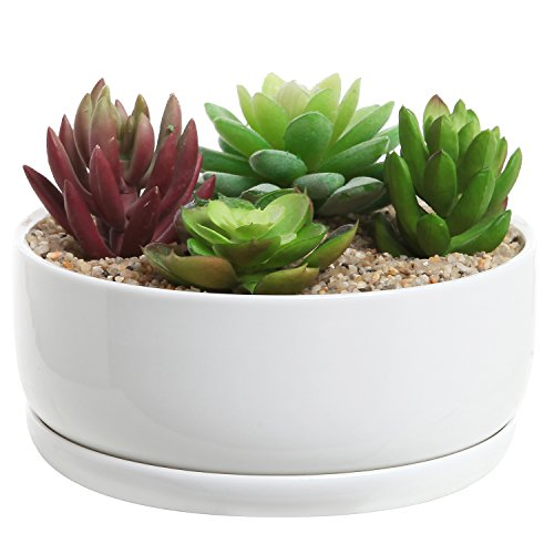 6-Inch Modern White Ceramic Round Designer Succulent Planter/Cactus Pot/Decorative Flower Holder Bowl (Bowl Cactus Planter)
