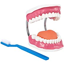 Mouth Model - Dental Care Oral Hygiene Model with Toothbrush, Foldable for Teaching and Demonstrating Proper Dental Tooth Care, 6.2 x 4.5 x 7.9 inches