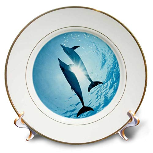 """3dRose Pair of Dolphins-Porcelain Plate, 8"""" (cp_206164_1)"""