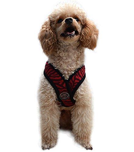 Amazon.com : Best Adjustable Small Dog Harness - Choke Free Soft Air