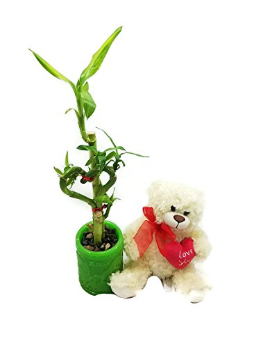 Stuffed Bear or Stuffed Dog Comes With Heart Shaped and S...