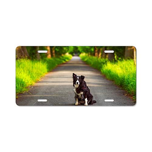 Zogpemsy Alumina Animal Border Collie Dogs Australian Shepherd Dog Road License Plate Frame