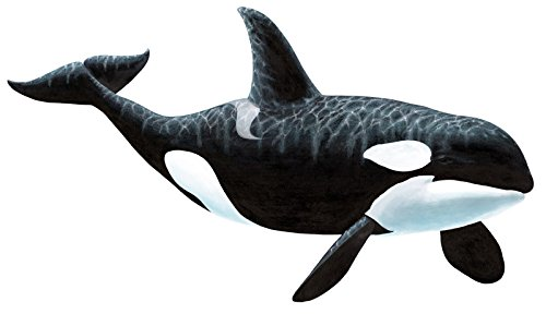 Whale Mural (Walls of the Wild Orca Killer Whale Wall Mural)