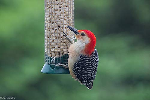 Peanuts, Shelled Bird Feed - 50 lb Bag