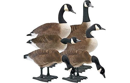 Goose Full Body (Big Foot B2 Full-Body Fully Flocked Canada Goose Decoys, 6 Pack)