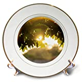 3dRose Stamp City - Nature - Photograph of a suolar Lens Flare Through The Maple Leaves. - 8 inch Porcelain Plate (cp_291312_1)