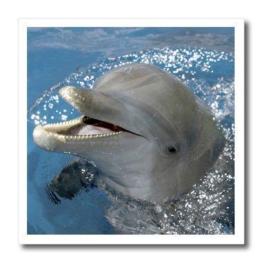 - 3dRose ht_86554_1 Atlantic Bottlenose Dolphin, Roatan, Honduras-Franklin Viola-Iron on Heat Transfer for Material, 8 by 8-Inch, White