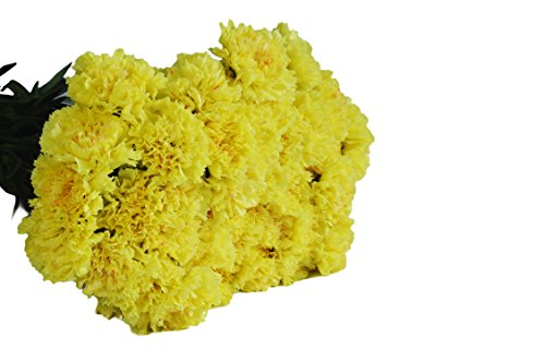 Farm2Door Wholesale Carnations: 75 Stems of Fancy Yellow Carnations from Colombia - Farm Direct Wholesale Fresh Flowers