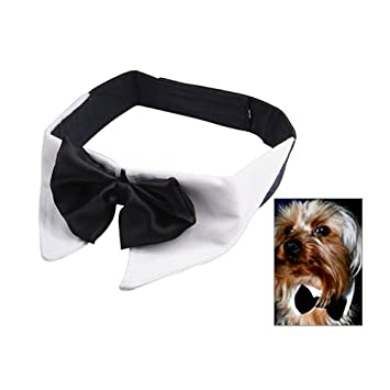 3b705ec6b5ec chinkyboo M White Dog Cat Cool Plain Shirt Collar & Black Bow Tie Perfect  for Parties Evening Special Occasion-Adjustable Neck Size M: 28 ~ 30.5cm:  ...
