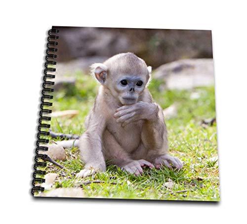 (3dRose db_132360_1 China, Qinling Mountains, BAX Golden Monkey As07 Aga0016 Alice Garland Drawing Book, 8
