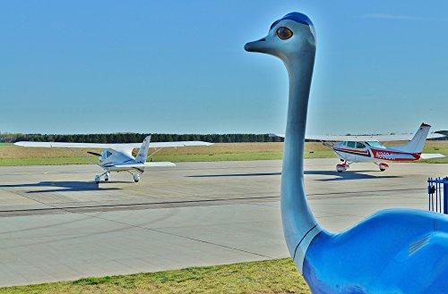 LAMINATED POSTER Mascot Sport-piloting Aircraft Strauss Fig Airport Poster Print 24 x - Mascot Airport