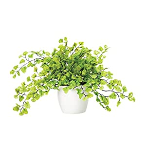 Maidenhair Fern Silk Foliage Plant 19