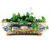 large italian planter - MAJOLICA: Large rectangular planter ''Fiori di Prato'' (Wild Flowers) [#PL10-MAJ]