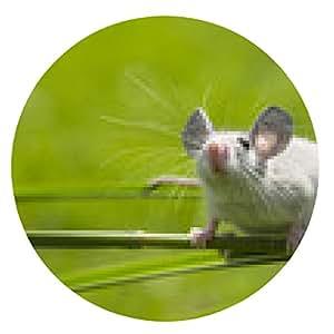 alfombrilla de ratón un pequeño ratón que se sienta en una hierba - ronda - 20cm
