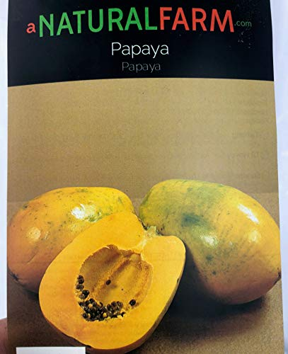 Papaya Live Tree Dwarf Improved Variety TR Hovey Non-GMO with Flowers, 4' to 5' Tall, Grown Organically, Quality Assurance, Including Organic Fertilizer & Planting Instructions