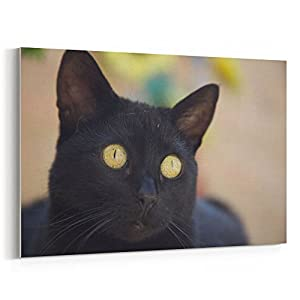 Westlake Art - Eye Whisker - 12x18 Canvas Print Wall Art - Canvas Stretched Gallery Wrap Modern Picture Photography Artwork - Ready to Hang 12x18 Inch (92FB-ADC2E)