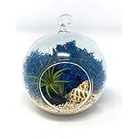 "Creations by Nathalie - 5"" Glass Globe Live Ionantha Tillandsia Air Plant Terrarium with Natural Preserved Moss, Natural Decorative Item and Decorative Rocks *DIY Terrarium Kit*"