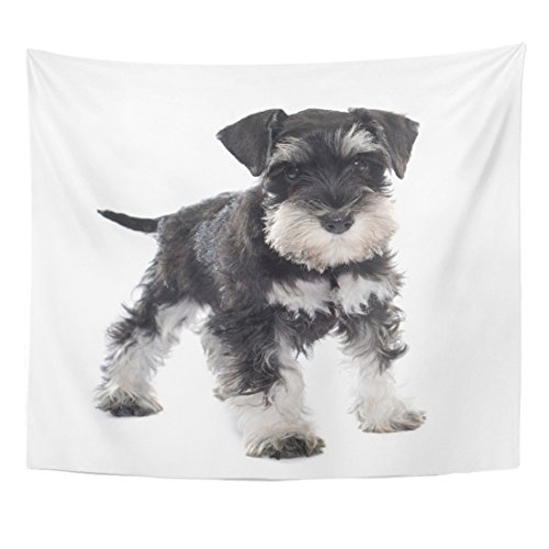 TOMPOP Tapestry Black Puppy Miniature Schnauzer in Front of Dog Pet Home Decor Wall Hanging for Living Room Bedroom Dorm 50x60 Inches