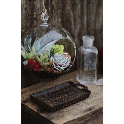 Hanging Globe Glass Terrarium - Indoor Succulent Garden (...