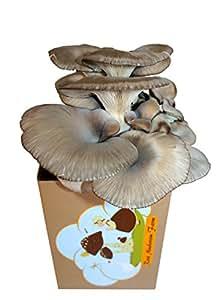Root Mushroom Farm—Oyster Mushroom Growing Kit-3 pound log