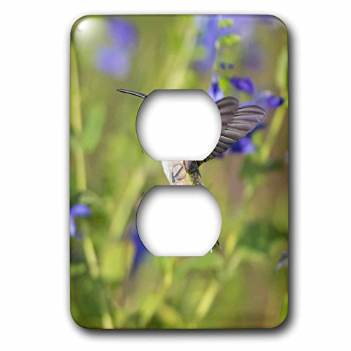 3dRose Danita Delimont - Hummingbirds - Ruby-throated Hummingbird at Blue Ensign Salvia, Marion County, IL - Light Switch Covers - 2 plug outlet cover ()