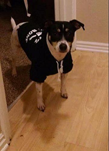 EXPAWLORER Black S Bad to The Bone Printed Skull Cat Fleece Sweatshirt Dog Hoodies