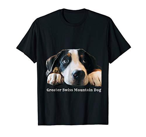 Greater Swiss Mountain Dog - ()