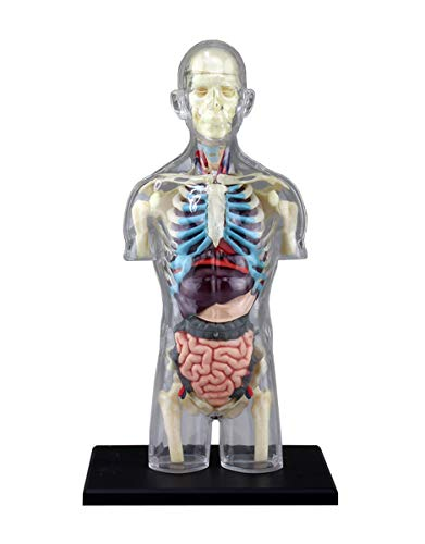 [해외]청도 문화 교재 사 스카이넷 입체 퍼즐 4D VISION 인체 해부학 No.14 동체 부 골격 모형 / Qingdao Culture Educational material company Skynet 3d Puzzle 4d VISION human anatomy No.14 body anatomy skeleton Model