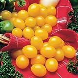 Park Seed Ildi Tomato Seeds
